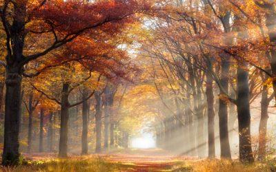 La saison d'automne 2021 commence!